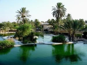 Découvrez Djerba la douce, l'île des flamants roses