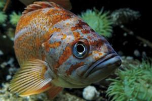Le Grand Aquarium de Saint Malo à découvrir !