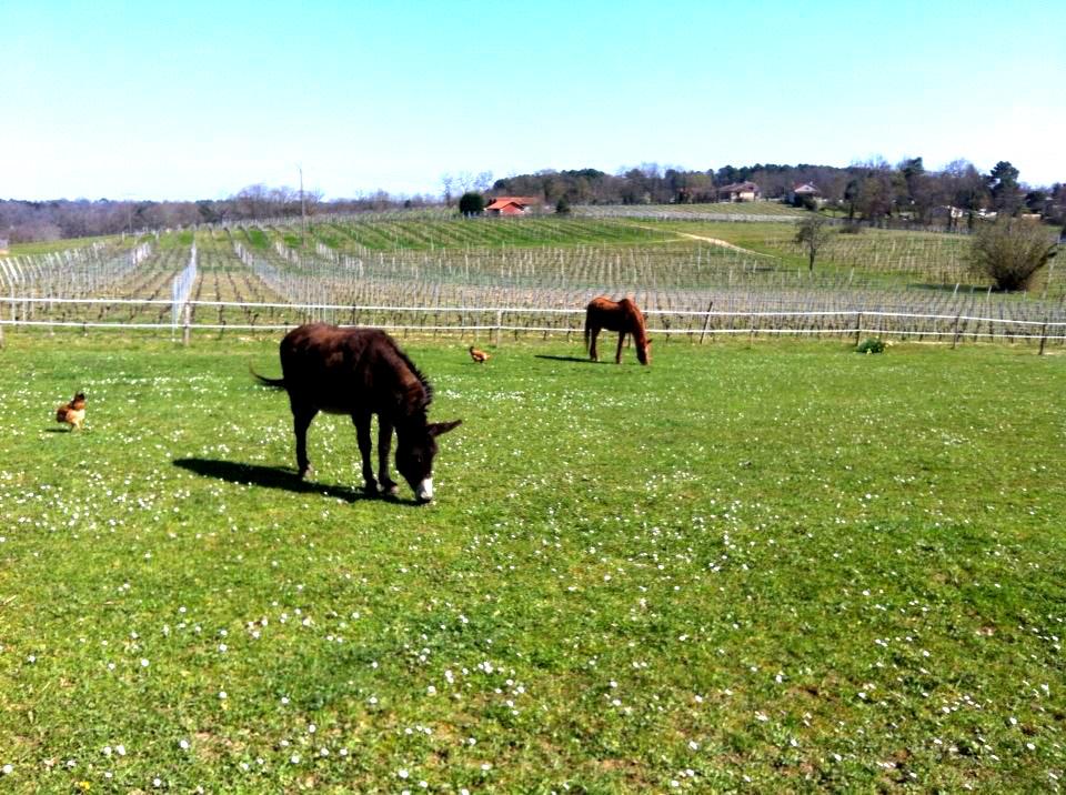 cheval et ane