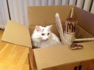 demenagement-maison-appartement-transfert-transport-securite-organisation-chat-comportement-conseil-demenager-demenagement-animal-animaux-compagnie-animogen-3