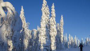 Comment passer de bonnes vacances de Noël au ski?