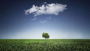 L'environnement s'épanouit dans les filières éducatives