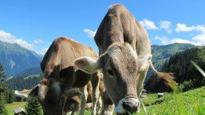 A la recherche d'un élevage de qualité et durable