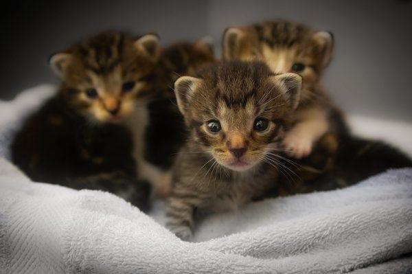 soigner animal sauvage