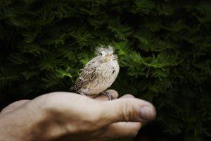Comment soigner des animaux sauvages malades ou blessés?