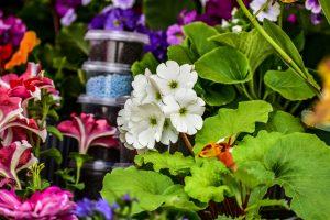 Entretien de jardin : 3 bonnes raisons de le faire maintenant