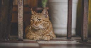 5 trucs que vous ne savez pas sur les chats